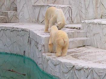 polarbear20100620_1.jpg