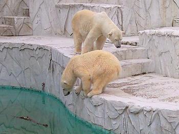 polarbear20100620_4.jpg