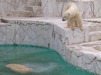 polarbear20100620_5.jpg